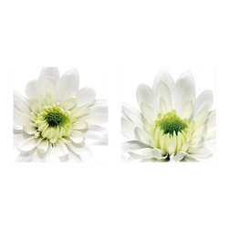 Platin Art - Platin Art Daisy - Set of Two - Daisy - Set of Two by Platin Art Deco Glass Wall Decor - Art on Glass - Daisy - Set of 2 - 11.75-by 11.75-Inch each Wall Art (2)