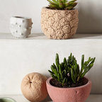 Stone Fruit Planter - Every front porch needs some plants, and these quirky pots would add a little fun to the space.