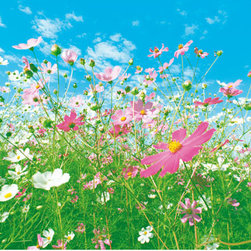 Flower Meadow Wall Mural - Set against a bright blue sky a field of pink and white flowers breathes life into this scenic wall mural.