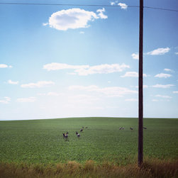 ArtStar - Pronghorns and Pole  11x14  White No Mat - I shot this from a car while just outside the Badlands, in South Dakota. Since I frequently take photographs out of the window of a moving car, you get a lot of telephone poles and random animals along the roadside. This is one of my favorite combinations of both.