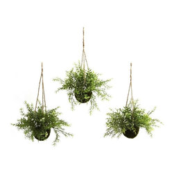 Ruscus, Sedum and Springeri Hanging Basket (Set of 3) - At home in a kitchen, dining area, or an office reception area, these wonderful Ruscus, Sedum & Springeri Hanging Baskets will certainly liven up any decor. With a light, almost fluffy look, the green sprigs and leaves reach out, as if to beg a passerby to touch them. best of all, these hanging baskets will stay fresh looking for years with nary a drop of water. Buy one set for yourself, and another for a friend. Height= 9 In. x Width= 15 In. x Depth= 15 In.