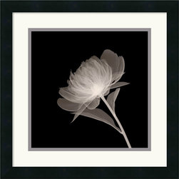 Amanti Art - Full Bloom Framed Print - By using x-rays instead of light, an inner vision is revealed, allowing nature to show textures, details, and shadows that would otherwise not be seen.