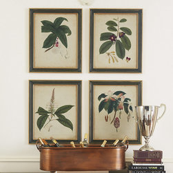 Ballard Designs - Engelmann Botanical Print - Deep green & antique gold frame. Glass front. Originally from Germany, 19th century botanist and physician George Engelmann migrated to America where he became famous for his work on the flora of the western United States. Based on his original bookplates, these beautifully detailed reproductions are printed on aged parchment background.Engelmann Botanical Print features:. .