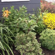 Kim's garden Buffalo NY