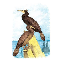 "Buyenlarge.com, Inc. - Townsend's Cormorant - Paper Poster 12"" x 18"" - Another high quality vintage art reproduction by Buyenlarge. One of many rare and wonderful images brought forward in time. I hope they bring you pleasure each and every time you look at them."