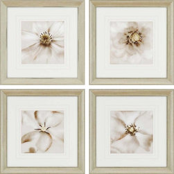 "Paragon Decor - Whisper, Set of 4 Artwork - Add a little nature to your walls with this beautiful set of 4, ""Whisper."" This set includes four separate studies of flowers' blooms. The images are delicate, and extremely close allowing stunning detail to be seen. Each piece has its own unique composition, but the set finds its cohesion in its shared style and technique. Each piece in this set is surrounded by a white matte and sits within a simple antiqued frame. Each piece in this set measures 24 inches wide, 2 inches deep, and 24 inches high."