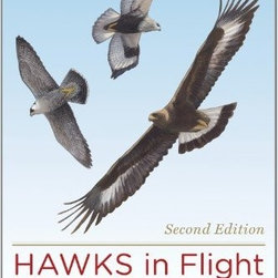 Peterson Books - Hawks in Flight 2nd Edition - Among the world's most popular birds, hawks can be some of the most difficult birds to identify. They are most often seen flying high above and at a distance.In the first edition of Hawks in Flight, Pete Dunne, David Sibley, and Clay Sutton presented a ho