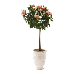 Winward Designs - Potted Garden Rose Topiary Flower Arrangement - A lush Garden Rose Topary potted in a cream urn standing approximately 5.3 feet tall will make a perfect display for your foyer.