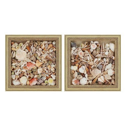 Paragon Decor - Shells Set of 2 Artwork - Shells in all shapes and sizes fill our shadow box to make each piece unique.