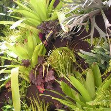 Eclectic  by Daniel Nolan for Flora Grubb Gardens