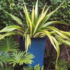 Contemporary Outdoor Planters by CARL BALTON & ASSOCIATES