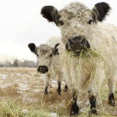 Farmhouse Photographs by Lucy Snowe Photography