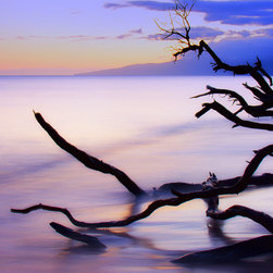 Create your style - Beautiful setting sun in the Maui skies,taken using long exposure,of a dead branch caressing the pacific shore