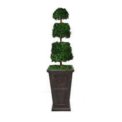 Laura Ashley - 63 in. Tall Preserved Natural Spiral Boxwood Cone Topiary - This preserved boxwood topiary will instantly liven up your home or office decor.. No need to shop for a planter separately - comes complete with decorative planter. Comes with a Spritzer; all you have to do is spray it once a month.. All Natural Preserved Boxwood Leaves.. 16 in. L x 16 in. W x 63 in. H (13 lbs.)