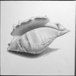 Seashell 7 (Original) by Heidi Fitzpatrick - My husband grew up visiting Delaware beaches every summer with his family. He holds a lot of fond memories of him and brother as kids. When drawing each sea shell in this collection, I paid a lot of attention to detail, as if I were still listening to my husbands' childhood stories and bringing them to life.