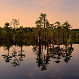 Cypress Swamp Sunset, Limited Edition, Photograph - Taken in George L Smith State Park, Georgia.  This serene and beautiful scene offers tranquility to the viewer.