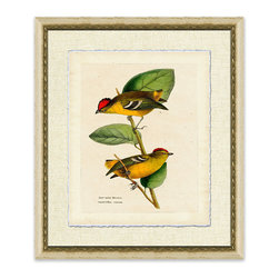 Frontgate - Short Tailed Manakin - This delightful pair of Short Tailed Manakin add vibrant color to your home. This giclee reproduction of a vintage hand-colored engraving has a deckled edge and is floated on a textured linen mat. Lovely on its own, but even better paired in a set of two or four. Giclee printing ensures the highest resolution quality and spectacular color fidelity. Finished with an antique white frame featuring an interior gold beaded detail. Made in the USA .