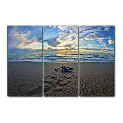"READY2HANGART.COM - Ready2hangart Christopher Doherty Photography 'Turtle' 3-PC Acrylic Art Set - Renowned photographer Christopher Doherty, takes you on adventures under and above water through his imagery. This photograph is offered as part of a limited ""Home Decor"" line, being the perfect addition to any living or work space."