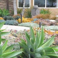 Contemporary  by debora carl landscape design