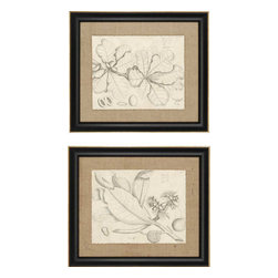 Paragon - Leaf Study I PK/2 - Framed Art - Each product is custom made upon order so there might be small variations from the picture displayed. No two pieces are exactly alike.