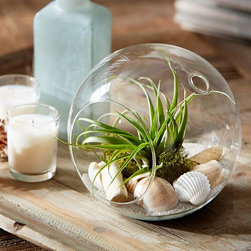 Live Tabletop Air Plant Garden - Here is a simple terrarium incorporating a small air plant, some sea shells and moss. This style is very easy to create and can be hung as well.