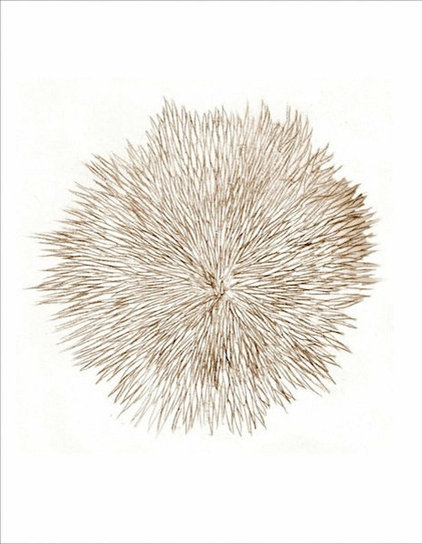 Guest Picks Sharpen Your Home S Look With Sea Urchin Decor