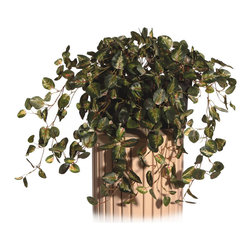 Vickerman - Pepperomia Windowbox - Pepperomia Ivy Metal Windowbox planter