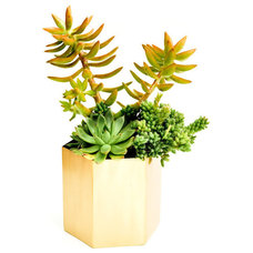 Contemporary Indoor Pots And Planters by LEIF