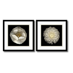 Amanti Art - Neil Seth Levine 'Levine Florals- set of 2' Framed Art Print 17 x 17-inch Each - At once classic and contemporary, this floral fine art print set by photographer Neil Seth Levine complement a wide range of home decorating styles.