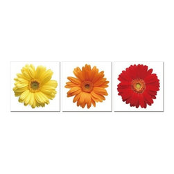 Elementem - Daisies Wall Art | Elementem - Design by Elementem Photography. Daisies is close-up shots of the inner workings of the Gerbera Daisy. They are vibrant and striking additions to any home, Daisies can be hung vertically or horizontally, together or separated into different areas of the home. Bring the garden indoors with Daisies.  Daisies is digitally printed on vinyl then mounted onto solid wooden MDF frames and covered with a thin layer of laminate that allows the print to be easily cleaned with Windex and water. All the wall hanging materials needed for installation are provided. Suitable for contract projects. Available in 20-In. X 20-In. Special orders can be placed for 24-In. X 24-In. and 28-In. X 28-In. Please contact our Sales Department at (800)236-9100 for more information.Elementem Photography is a proud member of 1 Percent for the Planet, a group of businesses that have committed to donating 1 percent of their sales towards environmental causes.