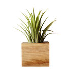 Moss + Twig - Air Plant & Magnetic Planter - And they said you couldn't grow a plant on metal! Well, this miniature magnetic wood planter says otherwise. It's a little wood cube that affixes to any magnetic surface, fridges included, with inexplicable magnetic power. It even includes an air plant which, we'll be honest, is incredibly easy to keep alive.