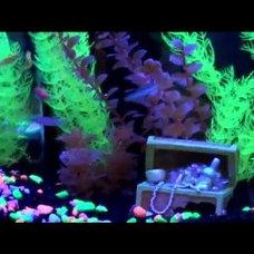 Amazon.com: Glofish 5-Pound Aquarium Gravel Bag, Black with Fluorescent Highligh