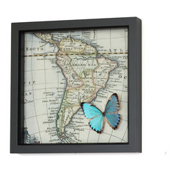 Bug Under Glass - Blue Morpho Natural History Butterfly Map - Bring a touch of nature to your living space or office with an eye-catching display that will delight scientists and geographers alike. A shimmery blue butterfly flies over an 18th century map of South America, seamlessly connecting two and three dimensional worlds.