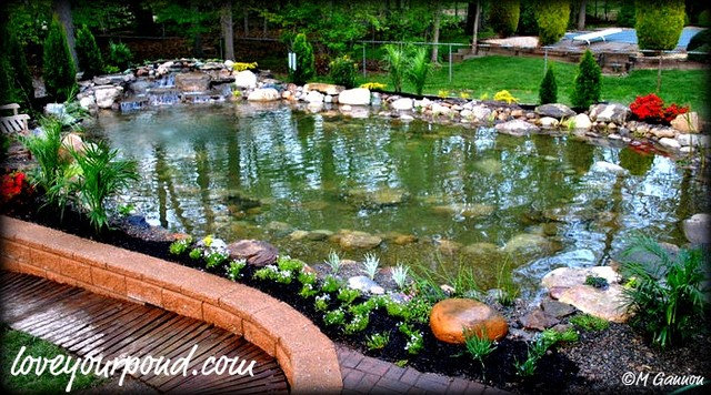 Watergarden koi pond designs by full service aquatics for Koi pool water gardens cleveleys