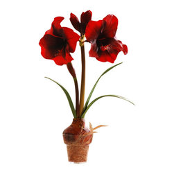 Jane Seymour Botanicals - Amaryllis in Pot - Why wait for late summer to enjoy the glorious bloom of the amaryllis? You can appreciate its dazzling beauty every day of the year with this deep red permanent amaryllis in a glass pot.