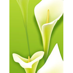 Light Lily Flower Custom Canvas Prints