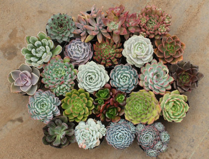 Traditional Plants by Etsy