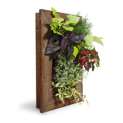 Grovert Wall Planter, Ghostwood - Grow your own lush wall garden with one of GroVert's stunning wooden frames! Each GroVert kit is assembled in six simple steps, making GroVert an effortless way to add greenery to your walls! Watering is simple and clean and keeps your walls dry.
