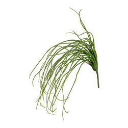 Silk Plants Direct - Silk Plants Direct Hanging Grass Bush (Pack of 12) - Pack of 12. Silk Plants Direct specializes in manufacturing, design and supply of the most life-like, premium quality artificial plants, trees, flowers, arrangements, topiaries and containers for home, office and commercial use. Our Hanging Grass Bush includes the following: