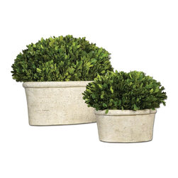 Uttermost - Uttermost Preserved Boxwood Oval Domes 8 x 14 x 12 (Set of 2) - Preserved while freshly picked, natural evergreen foliage looks and feels like living boxwood potted in mossy, stone finished terracotta planters.