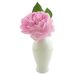 traditional vases by Design Darling