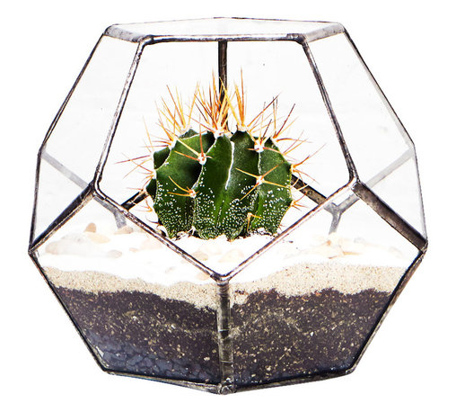 Telegraph Terrarium Planter, Small - Telegraph is an 11-sided dodecahedron terrarium named after the vibrant neighborhood on and around Telegraph Ave. in North Oakland.