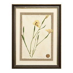 Botanicals Flowers K - White Iris - Framed - A stunning framed display of a flattened botanical specimen with many different options available to suit your mood or d�cor. Each specimen is one of a kind and no two will be alike. For those who desire uniqueness in their wall hangings, the Botanicals Collection can be placed in a room alone or with many clustered together for wonderful way to bring your love of nature indoors.