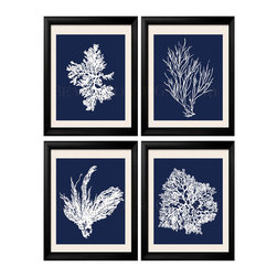 Coral Art, Coral Prints, White Blue Coral, Coral Artwork, Blue White Wall Art - Four 8x10 renditions of antique sea corals on a nautical blue background.