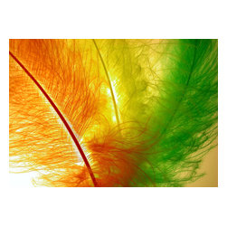 Custom Photo Factory - Decoration Feather Horizontal Multi Colored Canvas Wall Art - Decoration Feather Horizontal Multi Colored  Size: 20 Inches x 30 Inches . Ready to Hang on 1.5 Inch Thick Wooden Frame. 30 Day Money Back Guarantee. Made in America-Los Angeles, CA. High Quality, Archival Museum Grade Canvas. Will last 150 Plus Years Without Fading. High quality canvas art print using archival inks and museum grade canvas. Archival quality canvas print will last over 150 years without fading. Canvas reproduction comes in different sizes. Gallery-wrapped style: the entire print is wrapped around 1.5 inch thick wooden frame. We use the highest quality pine wood available. By purchasing this canvas art photo, you agree it's for personal use only and it's not for republication, re-transmission, reproduction or other use.