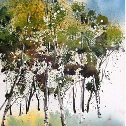 Aspen Spring II - Original Watercolor Painting - Spring time in the high country where the aspen sprout new growth amid the riot of saplings.