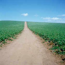 Field With One Road - Selected as part of the Artslant Landscape Collection Curation Category.