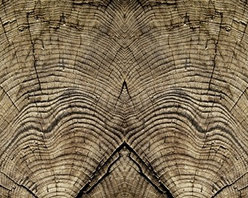 Walls Republic - Stump Rings Mural Wallpaper M8918 - 4 Panels - Stump Rings is a large scale digital wallpaper mural with the highly realistic look of tree rings. It is ideal for creating a statement wall in your living room or office for a great textural and natural look. Due to this item being a custom order, it takes longer to ship than our regular products.