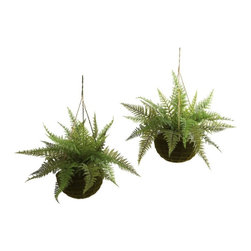 "Leather Fern with Mossy Hanging Basket (Indoor/Outdoor) (Set of 2) - The fern is an ideal ""hanging basket"" plant. The ""delicate but full"" leaves are seemingly made to spill out and over a pot, and the fresh look really brings home the sense of nature. This is a set of two leather ferns, complete with stunning ""mossy-look"" hanging baskets. Best of all, they are suitable for outdoors (as well as inside), meaning your decorating options are numerous (and year-round). Makes a great gift, too. Height= 13 In. x Width= 18 In. x Depth= 18 In."