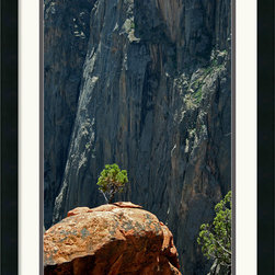 Amanti Art - Black Canyon Pinon Framed Print by Andy Magee - A steadfast Pinon Pine rises from the rocks of the Colorado Black Canyon, whether taken as an image of beauty or a metaphor for determination, this photograph would make a great addition to your home or office.
